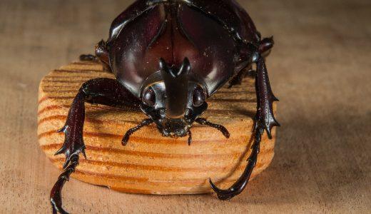 カブトムシはゴキブリじゃないよ??虫を触れない子どもたち。